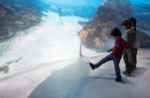 two children setting into a virtual ocean with a shark