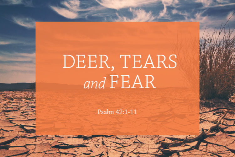 Deer, Tears, and Fear (Session 13, Ps. 42:1-11)