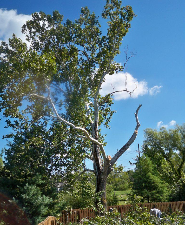 Nelson's Tree Service | Mid-Missouri Tree Care | Certified ...