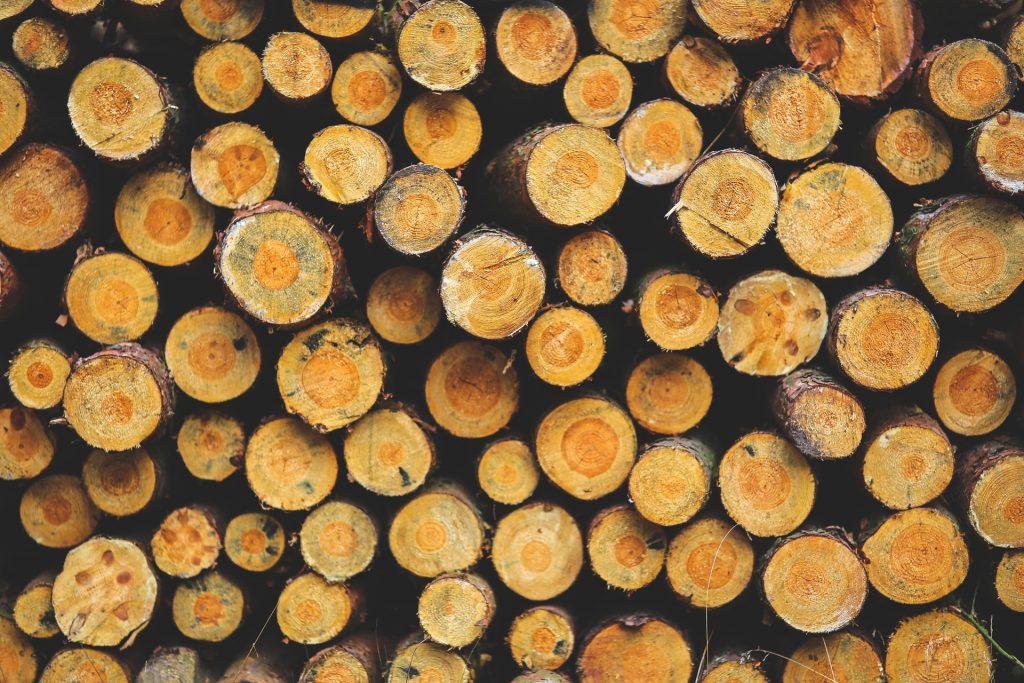 Overhead view of tree stumps