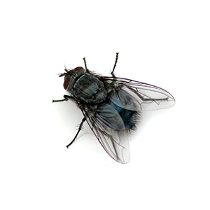 clusterFly