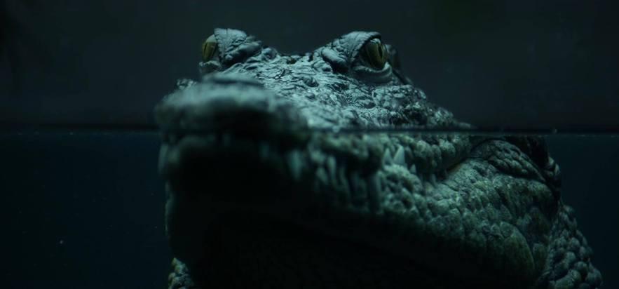 Still from Crocodile, 2013.