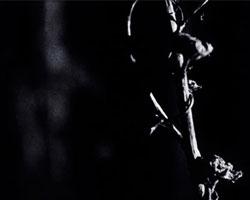 Dark Garden (film still) - Nick Collins