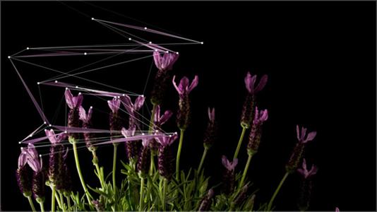Natures by Quayola and Mira Calix