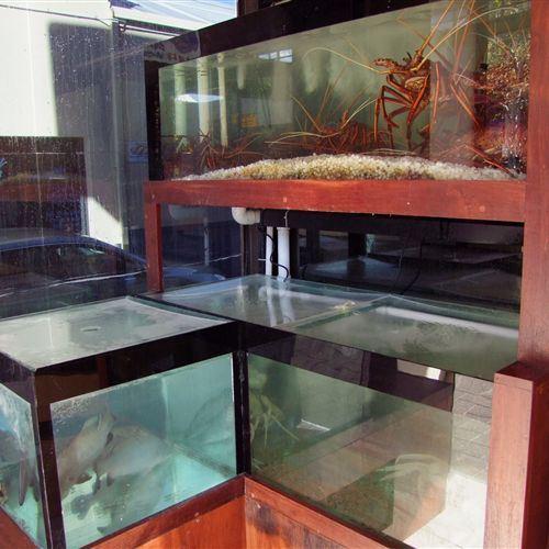 Crayfish tanks