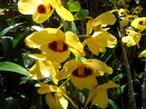 Orchids-sleeping-giant