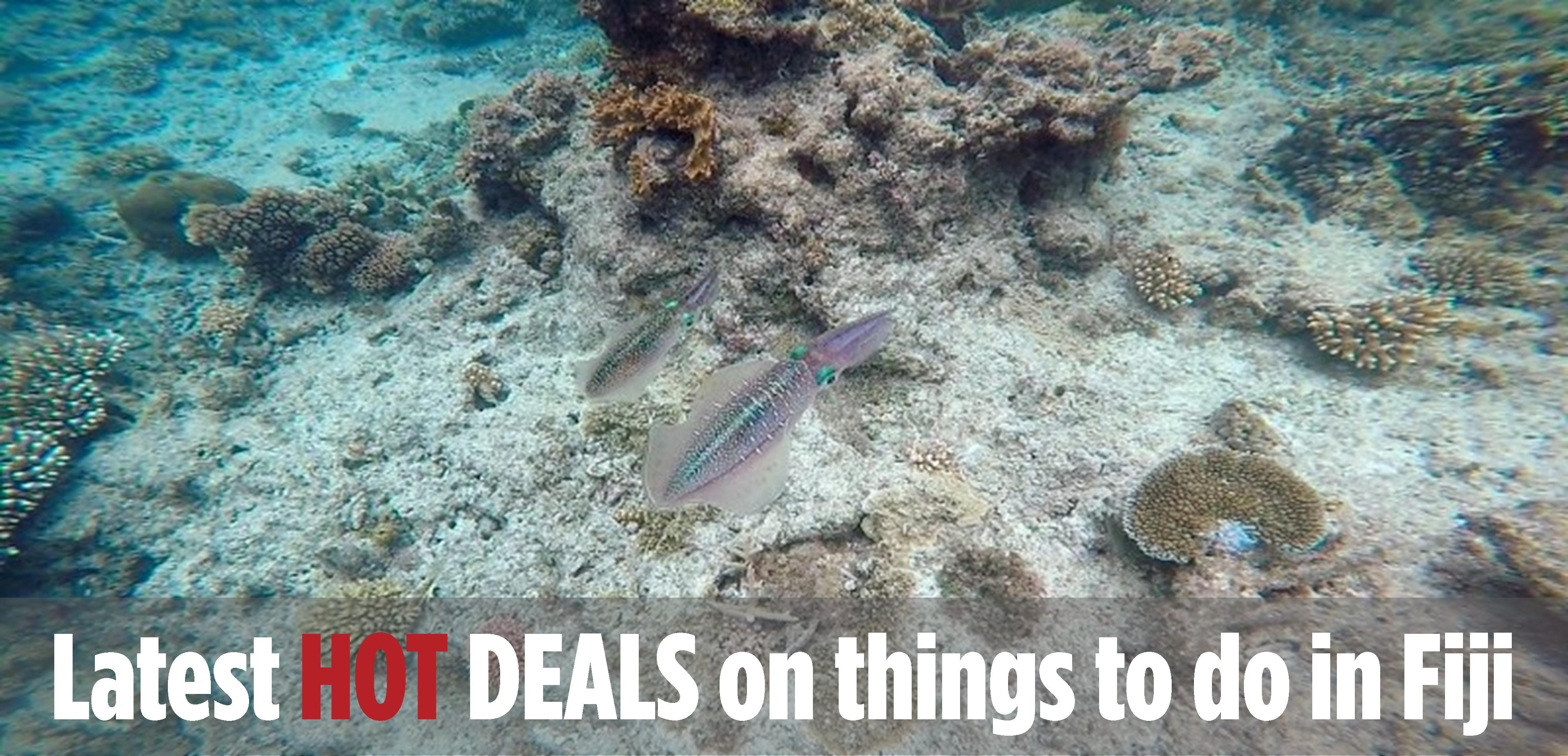 Latest HOT DEALS in Fiji
