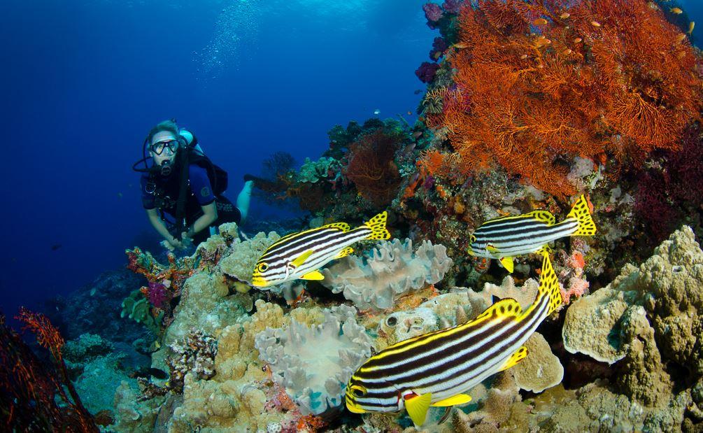 Bligh Water Diving in Fiji