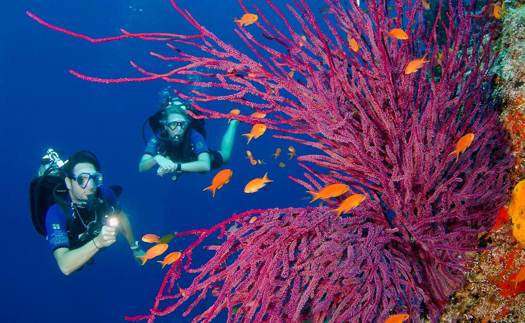 Bligh Water Diving Fiji