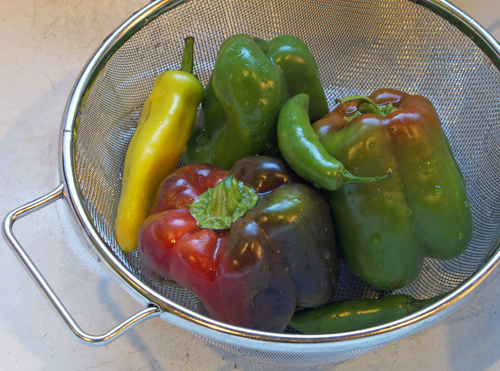 peppers-scaled.jpg - medium