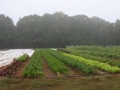 Bio-Way Farm