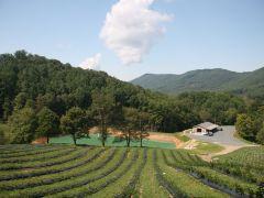 Bethel Valley Farms LLC