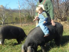 Foxtail Farm