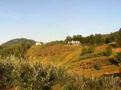 Brushy Mountain Berry Farm