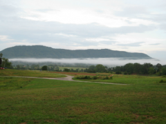 Black Oak Farms