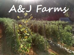 A&J Produce & Country Store