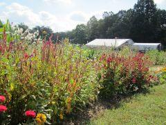 Bee-utiful Farm and Garden