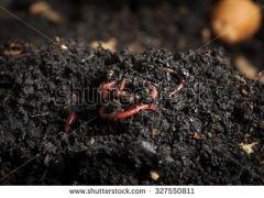 Frog Holler Organiks