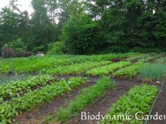 Adawehi Gardens & Orchard