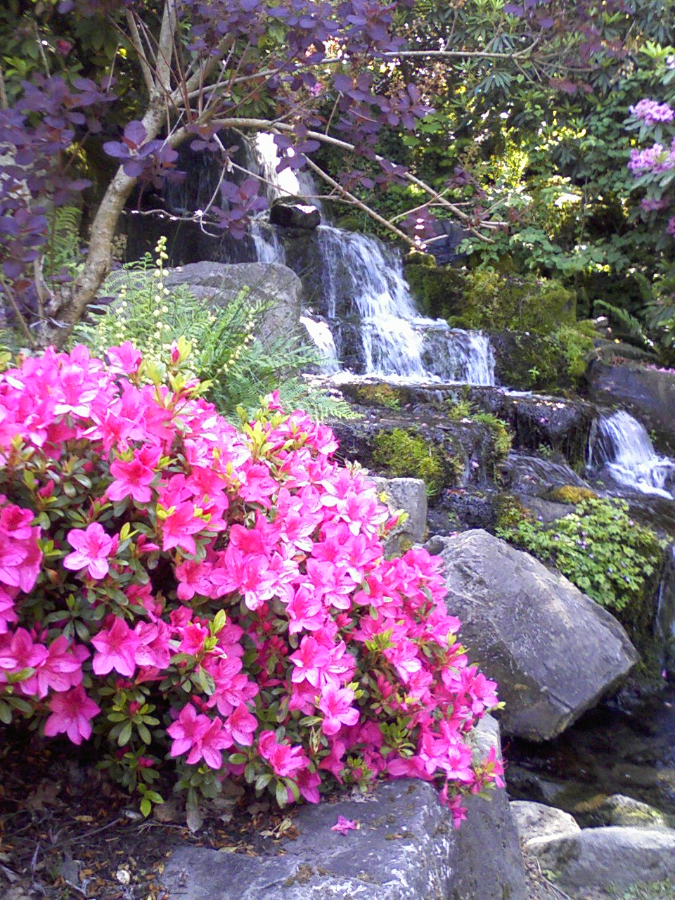 Quick Trips from Vancouver - Crystal Springs Rhododendron Garden ...