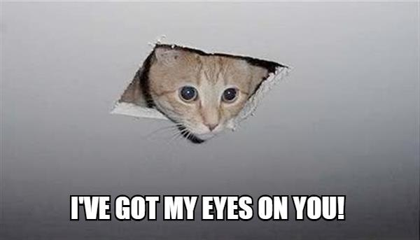 Cat looking through a hole in ceiling