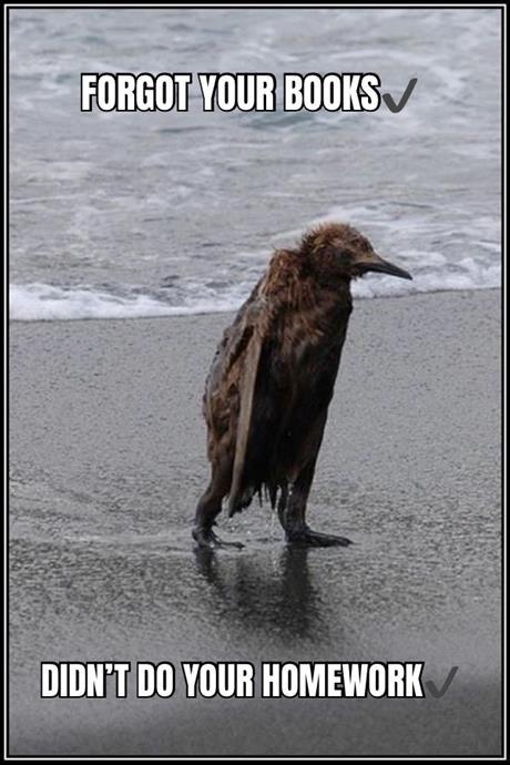 Soaked Bird