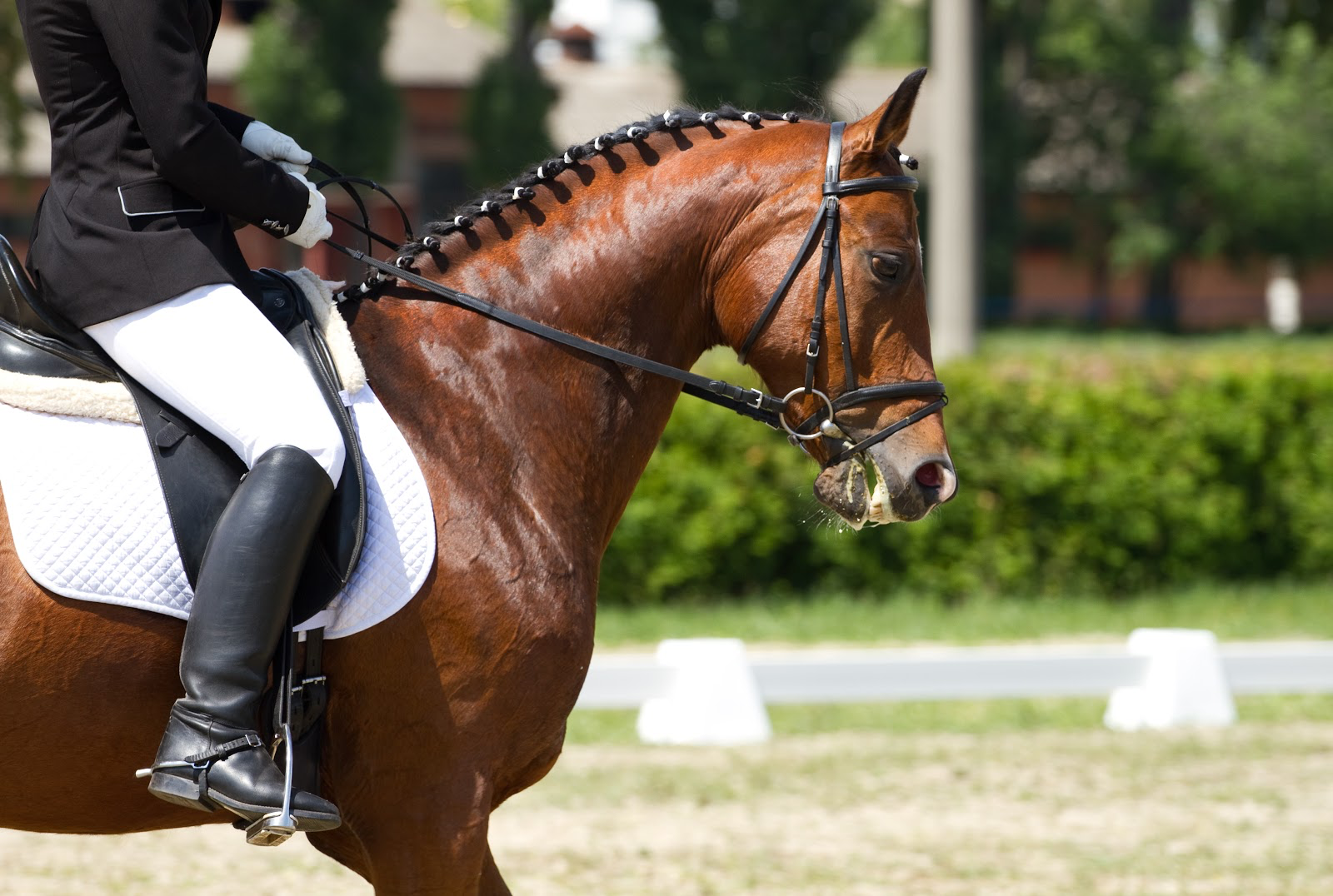 equitación qué