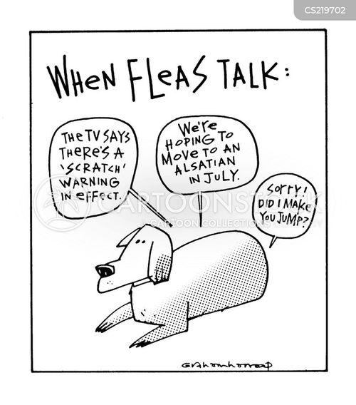 talking flea cartoons talking flea cartoon funny talking flea