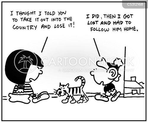 abandoned cats cartoons and comics