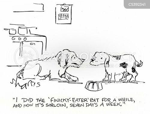 Dog Fussy Eating Habits