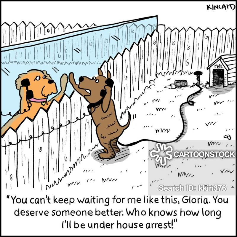 Outdoor Dog Kennel Indoor Outdoor Dog Kennels Jen Joes Design Cheap The Real Apbt Dog