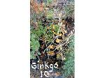 Lot: 5 - (15) Ginkgo Trees