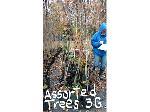Lot: 30 - (28) Assorted Trees