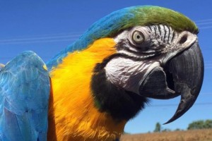 Plumpton Park Zoo brought animals, including a macaw, to Valleyfest 2017