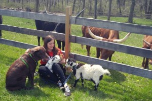 Lebanon Valley College alumna Kayla Miller talks about veterinary school as she plays with animals