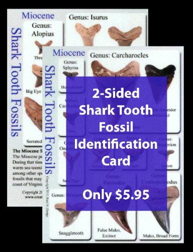 Shark Tooth Fossil ID Card