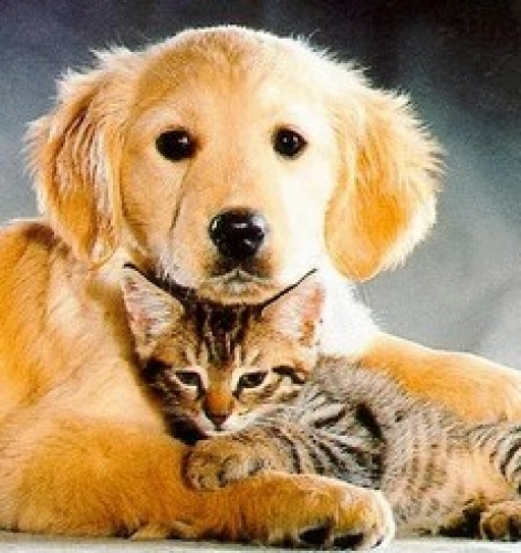∆ Moringa For Pets : Animal Integrated Health Therapy  For All Fuzzy/Furry Friends (DOGS, CATS, CATTLE, HORSES, ETC) Kit Kat (CLAIRE) Experiment Cat With Moringa Cured Her! ~E.G. PLOTTPALMTREES COM ~