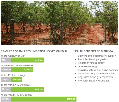 """Moringa Oleifera – Miracle Tree  """"Moringa oleifera is a tree brought from the mind of God to the hands of man"""""""