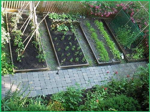 25 HEIRLOOM VEGETABLE GARDEN SEEDS NON-GMO/HYBRID ORGANIC SURVIVAL SEED BANK