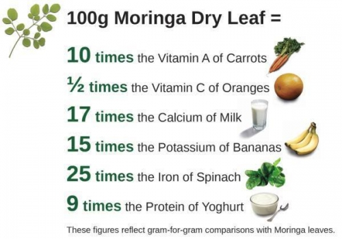 Complex™ Moringa Blend (Leaves, Stems, Flower Blossoms, Seeds, Pods) RICH