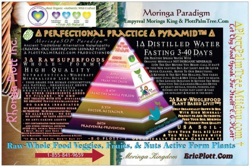 The Perfectional Practice Pyramid And ∆ EMPYREAN Pure Integrity Verified™ ~E.G.PLOTTPALMTREES.COM
