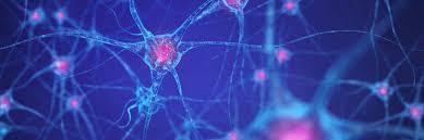 brain_neuron_large.jpg (389x129)px