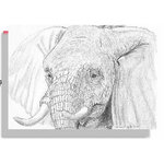 Elephant Face, Black & White sketch, canvas art picture by Brian Hollingworth - print