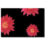 Flowers Pink Red Black Floral Canvas Art Picture