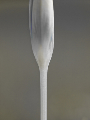Fine Art Print of Crocus Champagne Glass by Assaf Frank