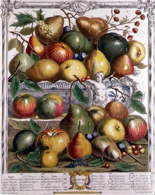 January, from 'Twelve Months of Fruits', by Robert Furber (c.1674-1756) engraved by Gerard Vandergucht (1696-1776) 1732 (colour engraving) by Pieter Casteels - print