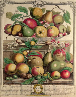 March, from 'Twelve Months of Fruits', by Robert Furber (c.1674-1756) engraved by Henry Fletcher, 1732 (colour engraving) by Pieter Casteels - print