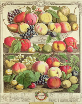 September, from 'Twelve Months of Fruits', by Robert Furber (c.1674-1756) engraved by Henry Fletcher, 1732 (colour engraving) by Pieter Casteels - print