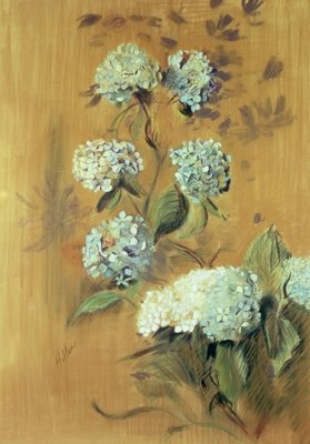 Hydrangeas (pastel on paper) by Paul Cesar Helleu - print