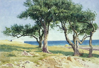 Old Olive Trees, Bordighera Poster Art Print by Edwin Bale